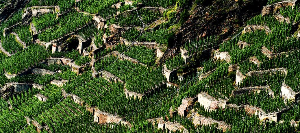 Terrassenmosel · Foto Klaus Lammai