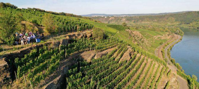 Erlebnis Wein-Berg – Genießen mit allen Sinnen