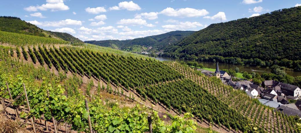 Wein und Wandern
